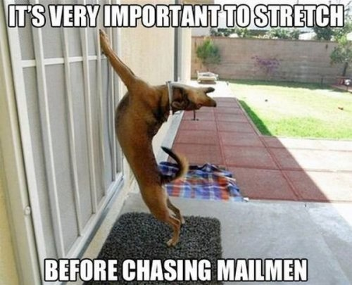 dog-humor-funny-its-very-important-to-stretch-before-chasing-mailman.jpg