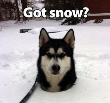 got-snow-thatpetplace-com-snow-day-lets-see-those-snow-pics-14144134.jpg