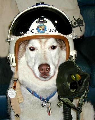 Major DJ Muttley