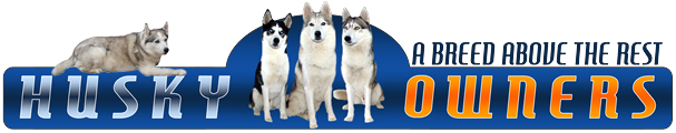 Husky Owners - The Siberian Husky Forum